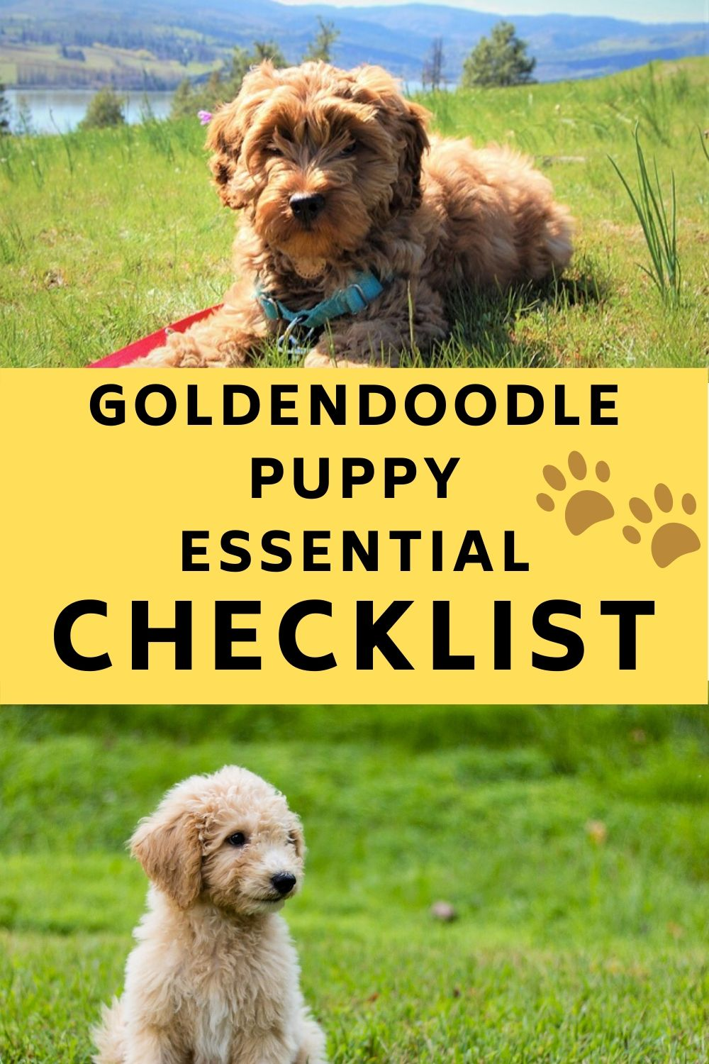 New Goldendoodle Puppy Checklist Complete Guide